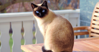 Top 5 world's most popular cat names